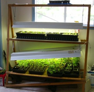 Light stand for growing seedlings